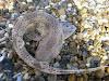 Cara unik embrio hiu bambu bertahan hidup. (Gambar 2)