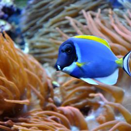by Albina Jasinskaite - Animals Fish