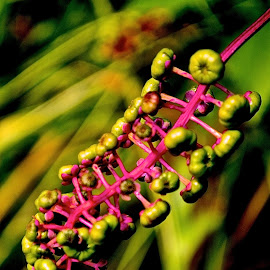 by Kelly Kochis - Nature Up Close Other plants (  )
