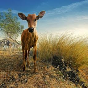 Little Cow by Ketut Manik - Animals Other