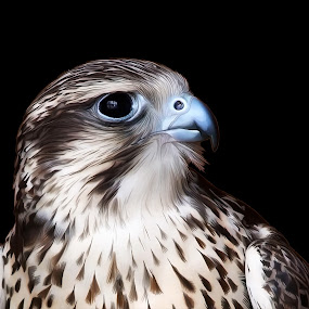 Falcon by Manal Ali - Digital Art Animals ( bird, falcon, digital, painting,  )