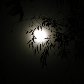 Full Moon behind the leaves by Raja Ambati - Nature Up Close Other plants