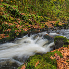 Cedar Creek in the Fall by Gina Jerabek Dasher - Landscapes Waterscapes ( cedar creek, trees, falls colors, woodland wa )