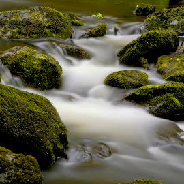 Forrest Stream by Stefan Friedhoff - Nature Up Close Water ( water, stream, forrest, close up, rocks )