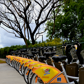 Bike Rental by Linda Taylor - Transportation Bicycles ( bicycles, queensland, bikes, transport, australia, brisbane, inner-city, transportation, rental, lipton tea, city,  )