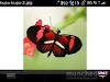 Bantimurung Ku dan kerajaAn kupu2 (Gambar 3)