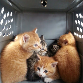 Rescue by Kylie Kellard - Animals - Cats Kittens ( rescue, cage, kittens, cuddle, six )