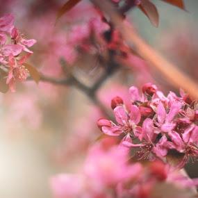 *** by Yasin Akbaş - Flowers Flower Arangements