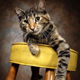Duchess the Cat by Christy Goldman - Animals - Cats Portraits (  )