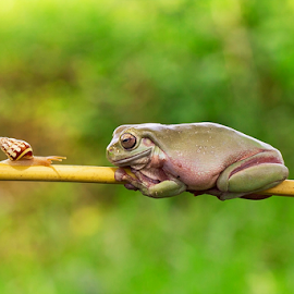 Morning Chat.... by Vincent Sinaga - Animals Amphibians