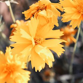 by Ashish Singla - Flowers Single Flower