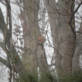 Tree with Squirrell  by Kristina  Dorsett - Nature Up Close Trees & Bushes ( animals, fog, trees, nature up close, squirrel )