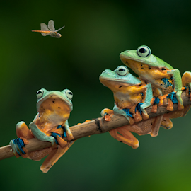 What the hell is That ?? by Robert Cinega - Animals Amphibians (  )