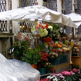 by Clara Scarano Scubla - Novices Only Flowers & Plants ( city view, flowers, street scenes )