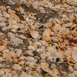 by Aires Spaethe - Nature Up Close Sand ( canon, sand, shells, florida, beach )
