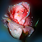 IMG_9493 copy.jpg