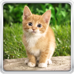 Cat Kittens Live Wallpaper