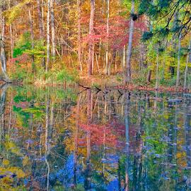 Beauty of Indiana by Brock Willis - Landscapes Forests ( indiana, reflection, nature, park, fall colors, colorful, awesome, fall, wonder, lovely, forest, pretty )