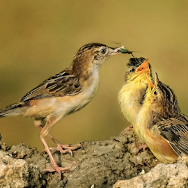 Whose Turn ? by MazLoy Husada - Animals Birds