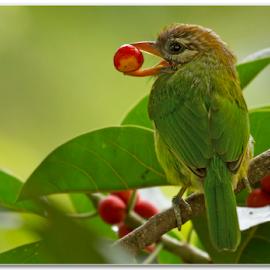 Meal Time by Thirumoorti Ra - Animals Birds ( bird, nature, food, india )