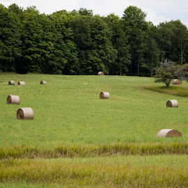 Hey! Or is it hay? by Daniel Johnson - Landscapes Prairies, Meadows & Fields ( hey, grass, hay, trees, bales, fields )