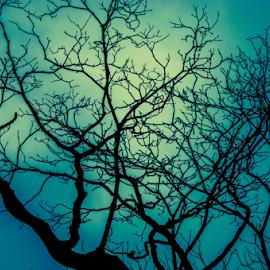 Dark Tree by Habeeb Rahman - Nature Up Close Trees & Bushes ( nature, dark tree, tree, black and white, white, dark, dracula, india, kerala, night, black )