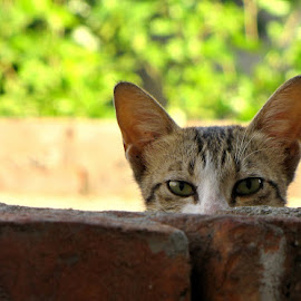 Meeaooo by Gaurav Madhopuri - Novices Only Pets (  )