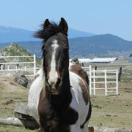 by Maria Egbert - Animals Horses