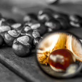 Exploring Autumn by Gary Seddons - Novices Only Objects & Still Life ( selective colour, magnifying, autumn, nuts, conkers, selective color, pwc )