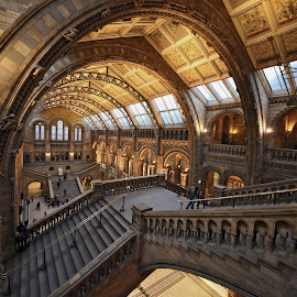 arches at NHM by Almas Bavcic - Buildings & Architecture Other Interior