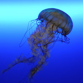 Jelly Walker by Leka Huie - Animals Sea Creatures (  )