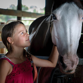 Friends by Kevin Tessier - Animals Horses ( farm, other keywords, animals, horses, horse, pets, white face, desert acres stables, portrait,  )