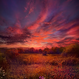 We Find Our Own Story by Phil Koch - Landscapes Prairies, Meadows & Fields ( vertical, wisconsin, ray, fine art, travel, phil koch, leaves, landscape, photography, sun, love, blue sky, sky, nature, autumn, path, horizons, flowers, light, flower, clouds, park, twilight, horizon, back light, scenic, morning, shadows, field, dawn, red, color, sunset, outdoors, fall, meadow, trees, landscapephotography, beam, sunrise, landscapes, floral, hike, mist,  )