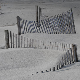Sand Fencing by Prentiss Findlay - Landscapes Beaches ( sand, dunes, sanddunes, ocean, beach )