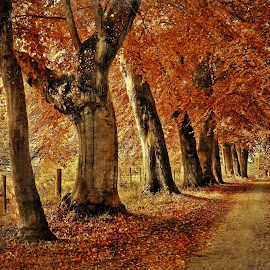 autumn by Tomasz Marciniak - City,  Street & Park  City Parks ( uk, tree, park, autumn, road, relax, tranquil, relaxing, tranquility )