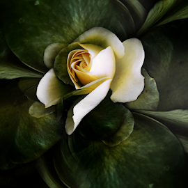 SHE, THE ROSE by Carmen Velcic - Digital Art Abstract ( abstract, green, she, roses, flowers, digital )