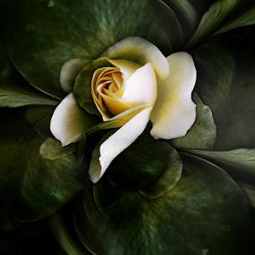 SHE, THE ROSE by Carmen Velcic - Digital Art Abstract ( abstract, green, she, roses, flowers, digital )