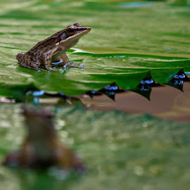 by Dee Donald - Animals Amphibians