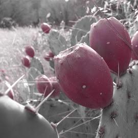 Cacti Flower by Shane Smiskol - Nature Up Close Other plants ( nature, cacti, cactus flower, bokeh, flower, close, cactus )