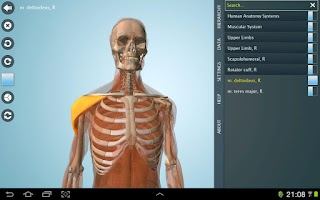 Screenshot of Anatomy 3D Pro - Anatronica