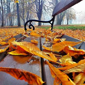 Benchs by Zlatko Sarcevic - City,  Street & Park  Amusement Parks ( nature, park, bench, autumn, leaves, public, furniture, object )