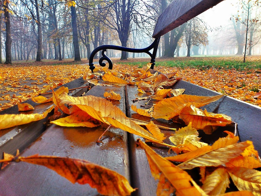 Benchs by Zlatko Sarcevic - City,  Street & Park  Amusement Parks ( nature, park, bench, autumn, leaves, public, furniture, object )