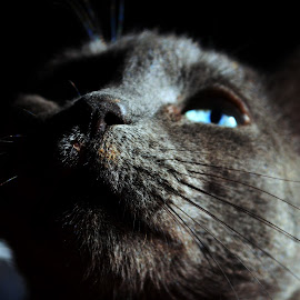 Black cat by Вита Кладченко - Animals - Cats Portraits