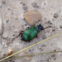 Beetles of Texas