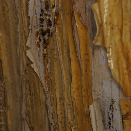 by Andreas Müller - Abstract Patterns ( fall off, macro, wood, paint, split, board, makro, close up, closeup, decay )