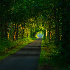 Light... @the end of the tunnel by Gerd Moors - Landscapes Forests ( tree, nature, green, road, landscape, light, tunnel, , renewal, trees, forests, natural, scenic, relaxing, meditation, the mood factory, mood, emotions, jade, revive, inspirational, earthly )