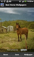 Screenshot of Best Horse Wallpapers