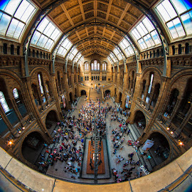 Museum of Natural History by Matthew Haines - Buildings & Architecture Public & Historical ( , people, crowd, humanity, society )