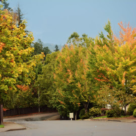 Fall in Portland  by Tristen Leck - City,  Street & Park  Neighborhoods ( oregon, portland, autumn, fall, leaves, color, colorful, nature )