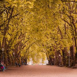 Relaxing by Rossana Ferreira - City,  Street & Park  City Parks ( park, tree, fall, jardim da cordoaria, portugal, porto )